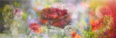 Flora - Nature's Beauty
