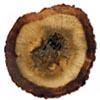 Agarwood Image