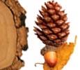 Cashmere Wood Image