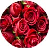 Red Roses Image